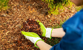 kompost-faydalari